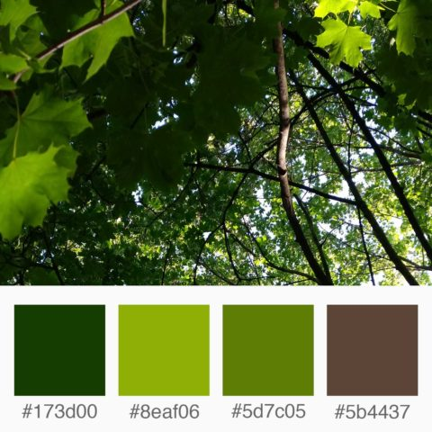 Weekly Colours Inspiration - Tree