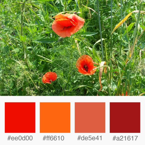 Weekly Colours Inspiration - Poppy Flower: Shades of Red