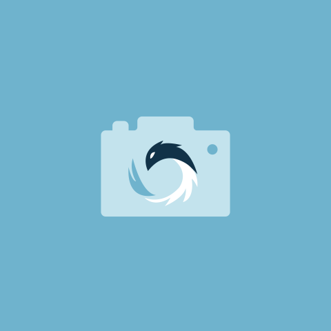 Phoenix Photography Logo